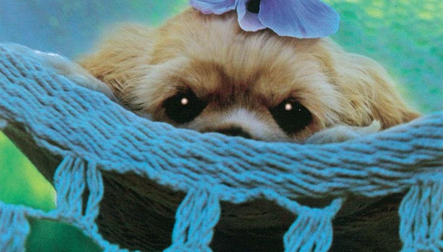 158-puppyThumb