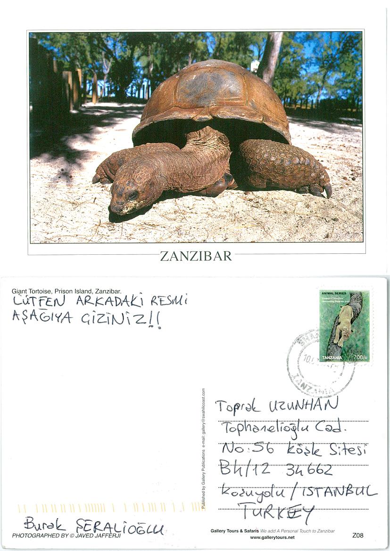 ZanzibarThurtle